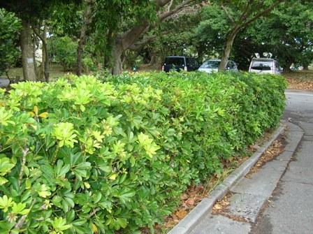 yadorifukanoki_tree001.jpg
